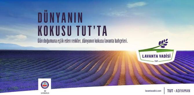 "TUT İLÇESİ ""LAVANTA VADİSİ""OLACAK"
